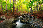 Bulgarian forest stream — Stock Photo