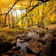 Golden forest — Stock Photo #14485061