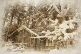 Forest vintage hiver — Photo