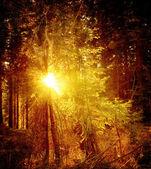 复古森林景观 — 图库照片