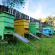 Stock Photo: Bee houses