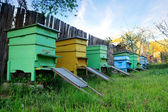 Bee houses — Stock Photo