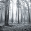 Stock Photo: Bw forest