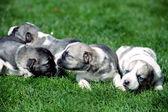 几个宝贝的狗 — 图库照片