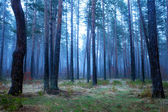 Fogy forest — Stock Photo