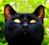 Black cat in garden — Stock Photo