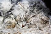 ленивый кот 2 — Стоковое фото