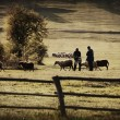 Vintage farmland — Stock Photo