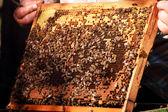 Včelí hnízdo — Stock fotografie