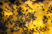Nido ape — Foto Stock