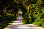 Sunny green forest road — Stock Photo