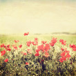 Stock Photo: Vintage flowers