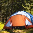 Forest with tent — Stock Photo