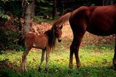Dziecko konia — Zdjęcie stockowe