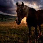 Golden horse landscape — Stock Photo #28988383