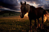Golden horse landscape — Stock Photo
