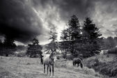Black and white horses — Stock Photo
