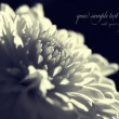Bw flower background — Stock Photo