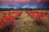 HDR red meadows — Stock Photo