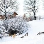 Bulgarian winter meadows — Stock Photo