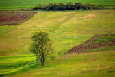 Agricultural spring landscape  — Stock Photo