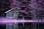 Infrared purple landscape — Stock Photo