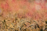 Golden meadows pattern  — Stockfoto