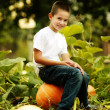 Little happy boy sits on a big orange pumpkin — Stock Photo #19223089
