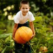Little funny boy with pumpkin — Stock Photo