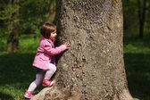 Little girl climbing tree in the park — Stock Photo