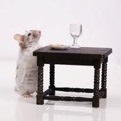 Mouse dines at the table — Stock Photo