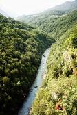 Tara river — Stock Photo