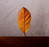 Outono licença contra janela molhada — Foto Stock