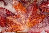 Närbild av frusna löv — Stockfoto