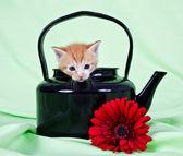 Imbir kociak siedzi w czarny czajnik — Zdjęcie stockowe