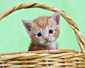 Ginger kitten sitting in a basket — Стоковое фото