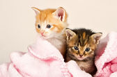 Two kittens in a pink blanket — Stock Photo