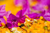Purple flower with shallow dept of field — Stock Photo