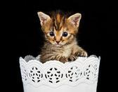 小猫站在白色的容器 — 图库照片