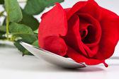 Rosa vermelha, deitado sobre uma colher de prata — Fotografia Stock