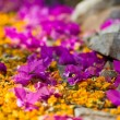 Pathway with yellow and purple flowers - Stock Photo
