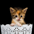 Kitten wanting to climb out of container — Stock Photo #19483163