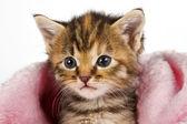 Kitten in pink blanket looking alert — Stock Photo