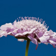 Lilac flowers against blue sky — Stock Photo