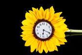 Horloge chez le tournesol — Photo