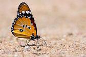 Schmetterling auf boden saßen — Stockfoto