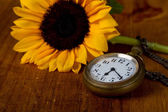 Pocket watch and sunflower — Stockfoto