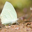 Butterfly sitting on ground — Stock Photo