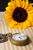Pocket watch and sunflower — Stock Photo