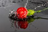 Kırmızı çiçek suya düşmek — Stok fotoğraf